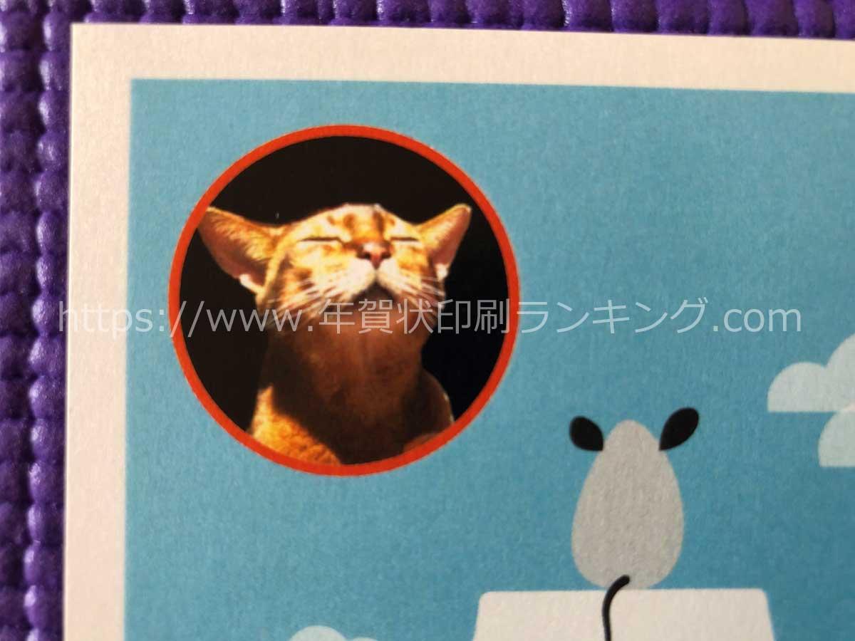 挨拶状ドットコム2020年写真フレームタイプちょこっと写真(N20E456)の写真とベタ面のアップ