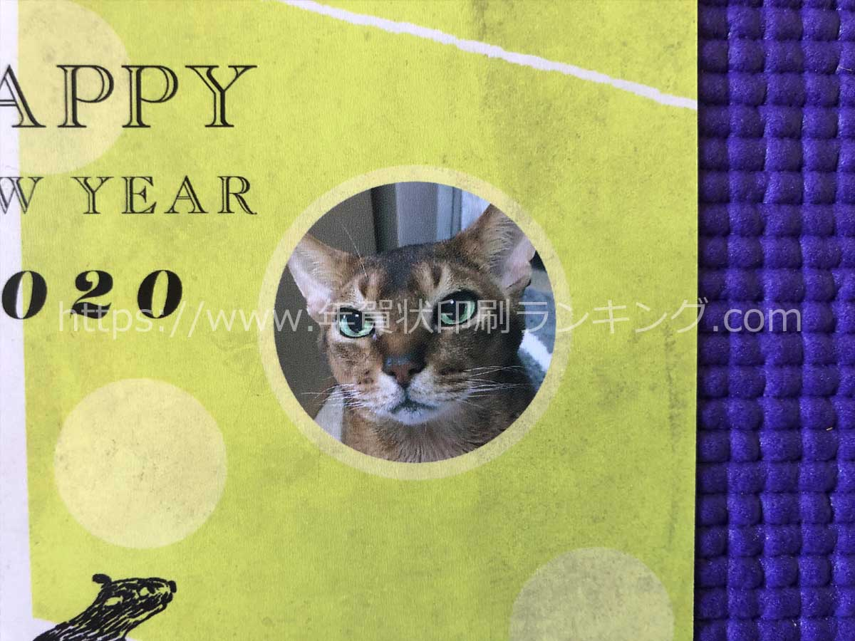 挨拶状ドットコム2020年写真フレームタイプちょこっと写真【プレミアム仕上げ】(N20E458)の写真部分の拡大